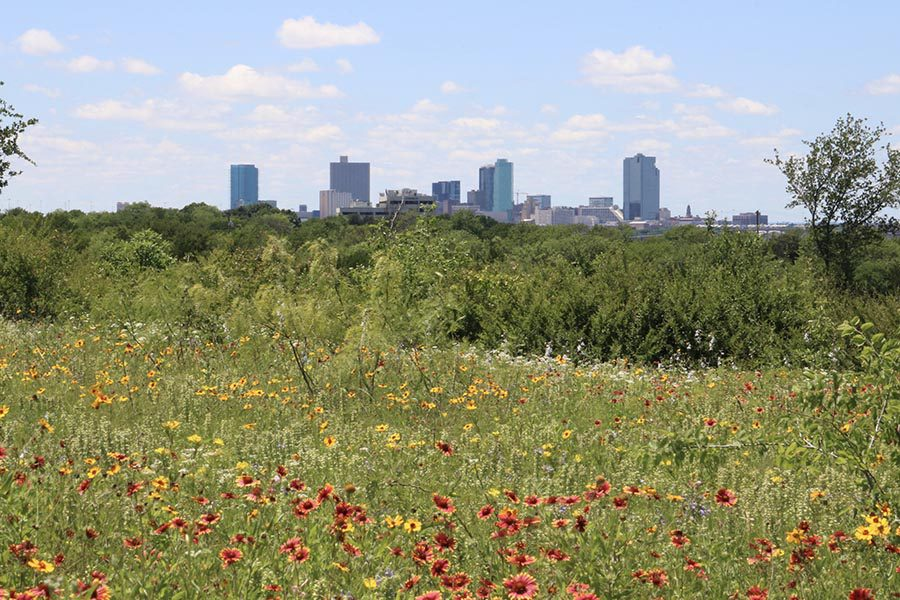 Pantego, TX Insurance - View of Downtown Fort Worth, TX From a Field of Red and Yellow Wildflowers and Tall Grasses