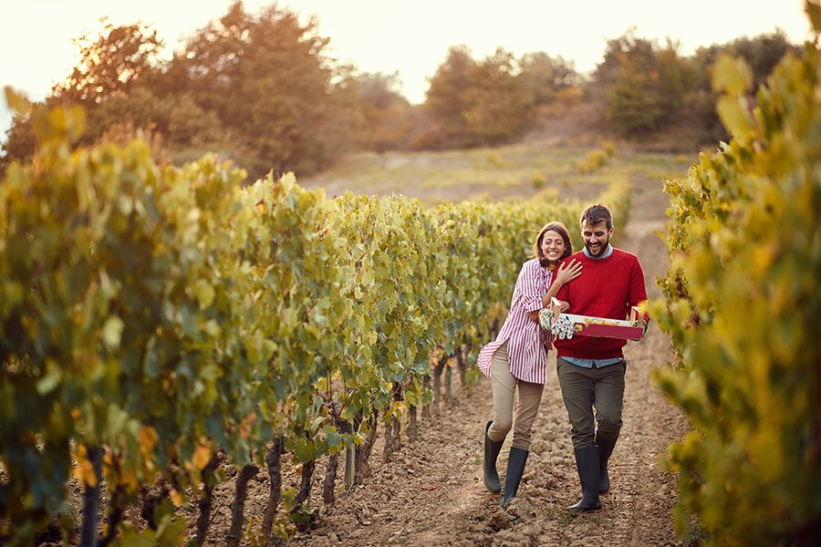 Specialized Business Insurance - View of a Cheerful Young Couple Walking Through Their Vineyard Ready to Pick Some Grapes