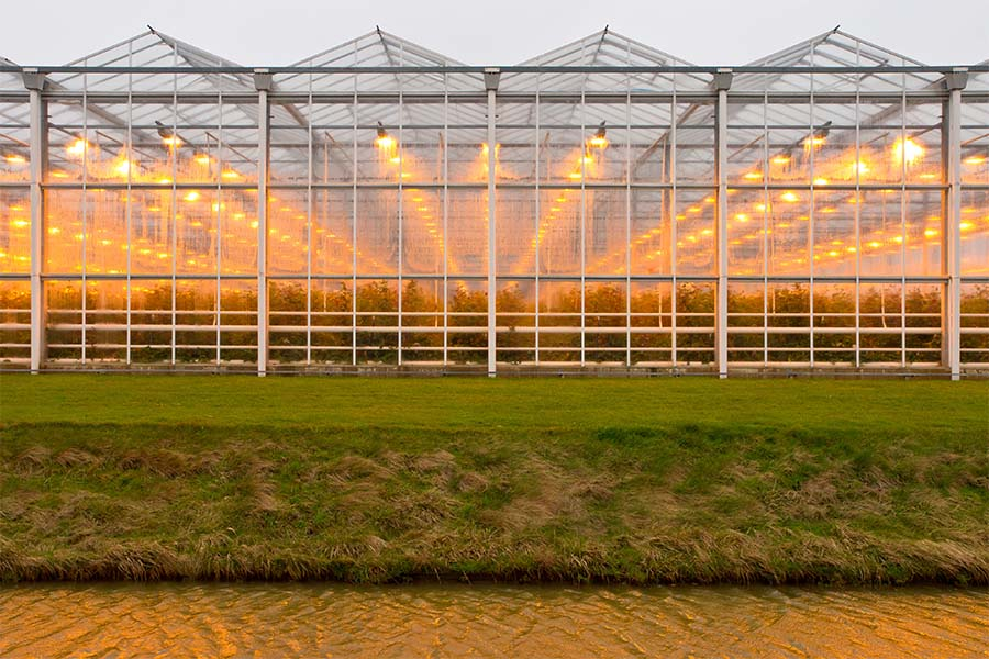 Greenhouse Insurance - Exterior View of a Modern Commercial Greenhouse with the Lights Turned on During the Evening Hours Next to Green Grass