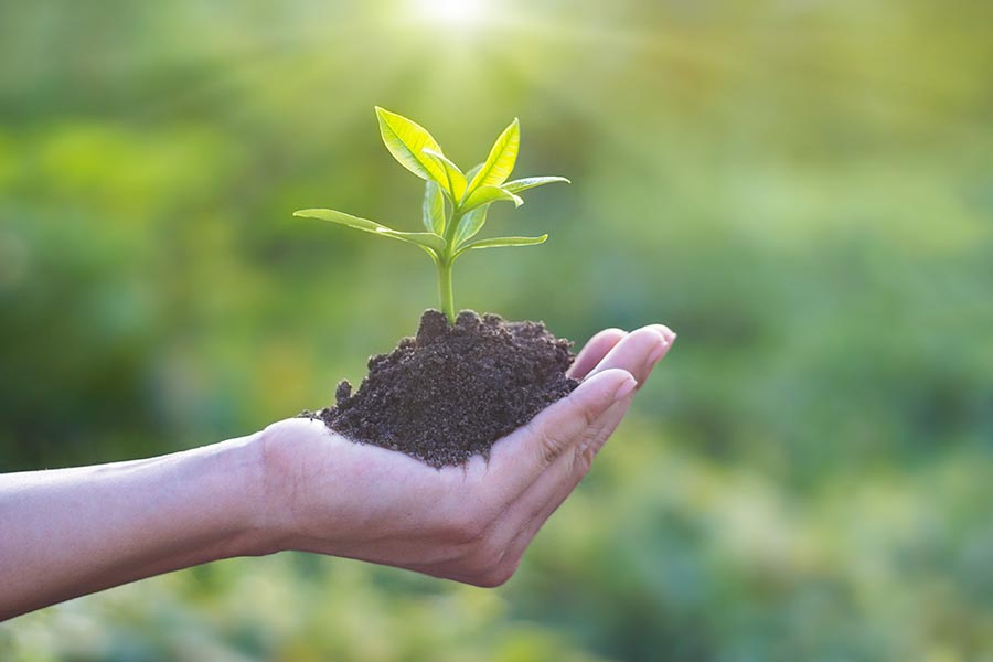 Going Green - Hands Holding Young Plant With Soil, Signifying Efforts To Protect the Environment
