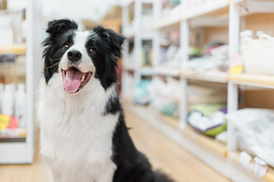 Pet Business Insurance - Happy Dog in Pet Store with Dog Food Blurred in the Background