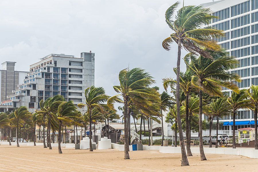 Commercial Hurricane Insurance - Palm Trees Blowing in the Wind at a Beach During Hurricane