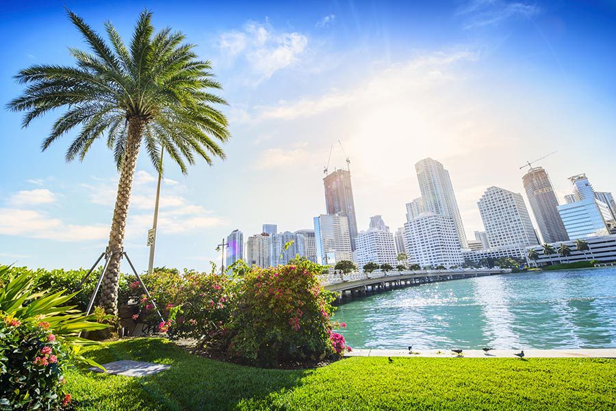 Miami Lakes, FL Insurance - Bright and Sunny Day With Miami Skyline in the Background, Beautiful Palm Tree and Green Grass in the Foreground