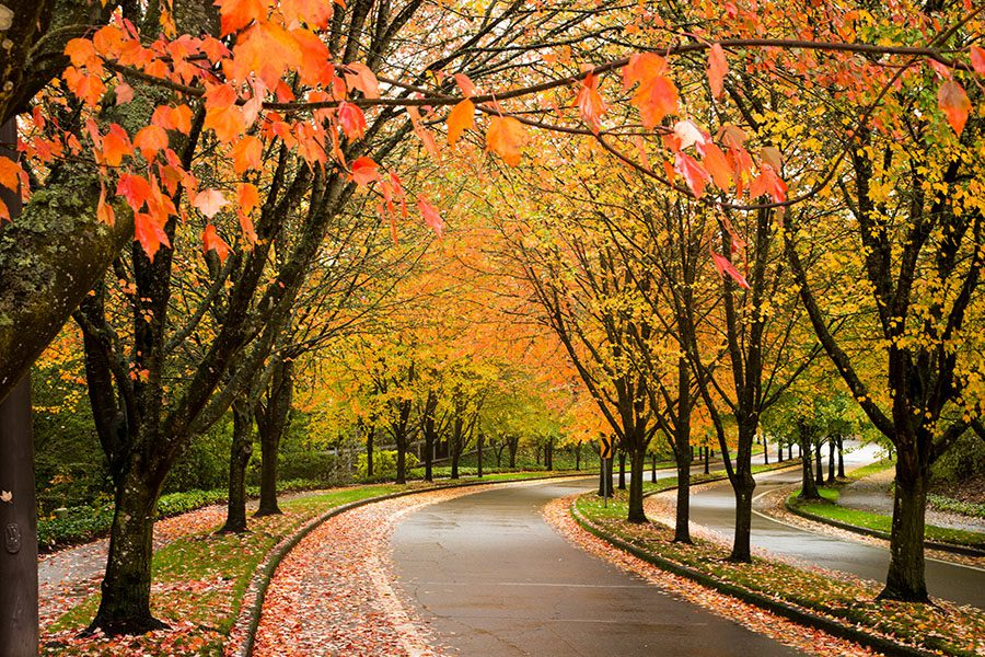 Beaverton, OR - A City Street in Beaverton, Oregon Lined with Trees Showing Autumn Fall Colors