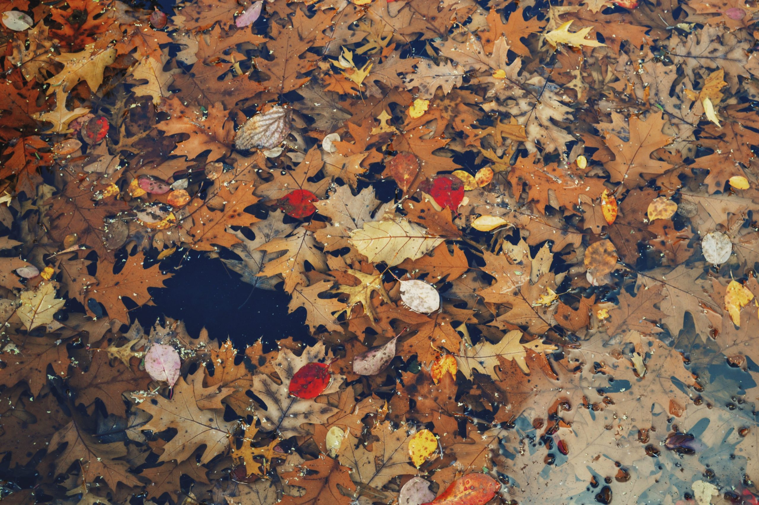 Leaves to highlight the fall season