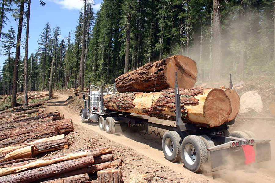 Logging Insurance - Large Logging Truck Transporting Large Logs with Forest in the Background