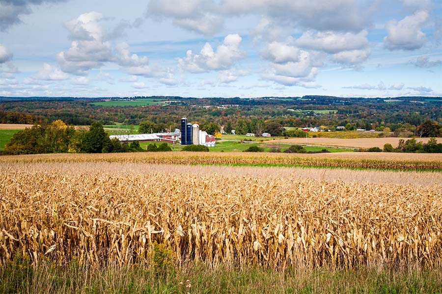 Corning NY - Scenic View of a Field of Wheat with Views of a Farm in the Background in Corning New York