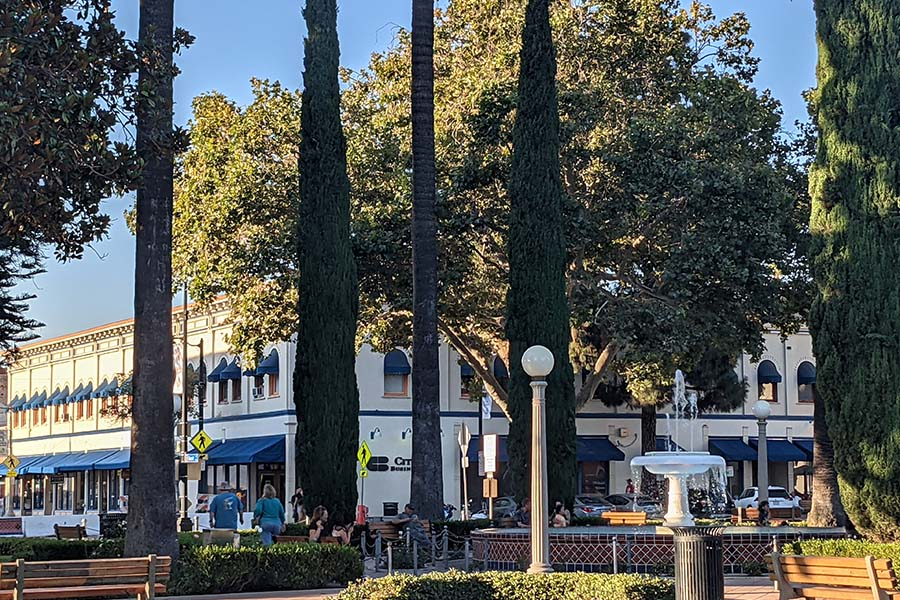 Homepage - View of a Downtown Plaza Displaying a Center Park With Tall Plants and Trees and a Water Fountain in the Center on a Sunny Day