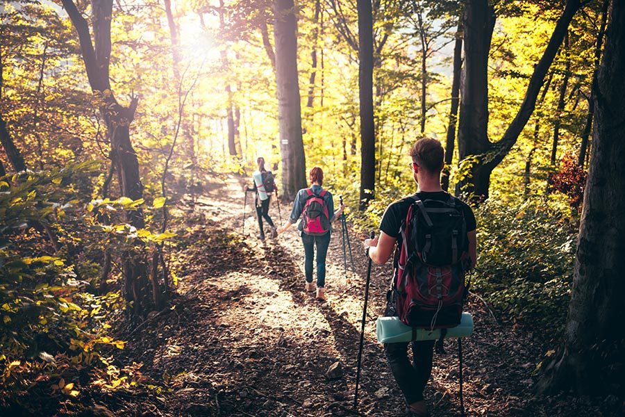 Blog - People Hiking Down a Hill in a Forest Wearing Camping Gear