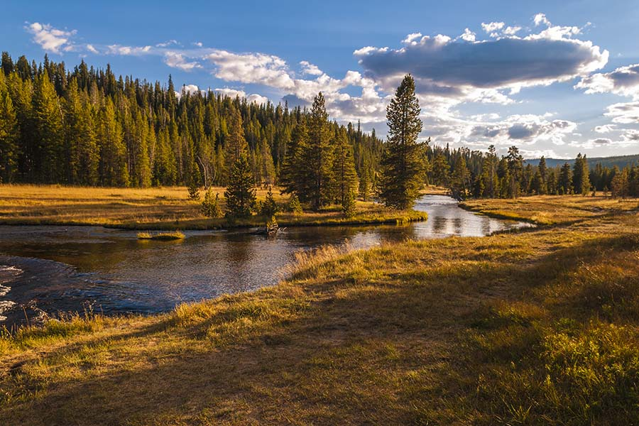 We Are Independent - Scenic View of the Forests Next to a Creek During the Fall at Sunset