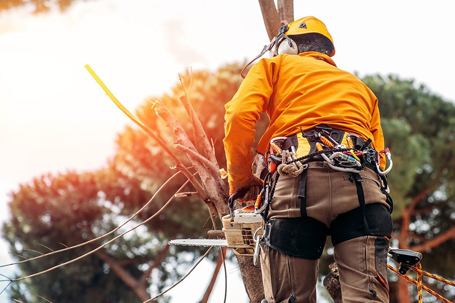 Arborist and Tree Service Insurance - Arborist with Helmet and Equipment Saws Branches with Chainsaw from Tree