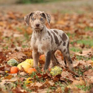 dog surrounded by leaves, pumpkins and gourds