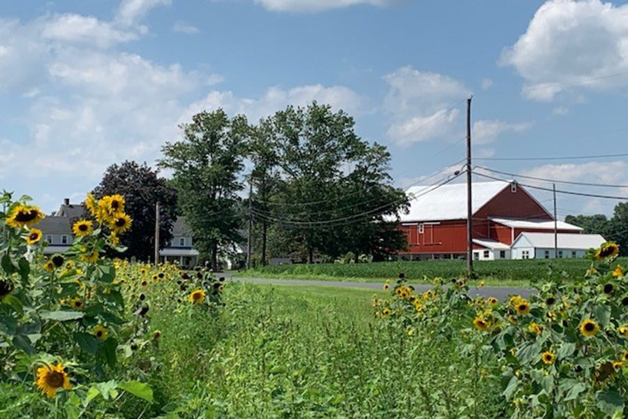 Contact - Red Barn on a Farm, Bright Sunflowers in the Foreground, White Fluffy Clouds in a Blue Sky