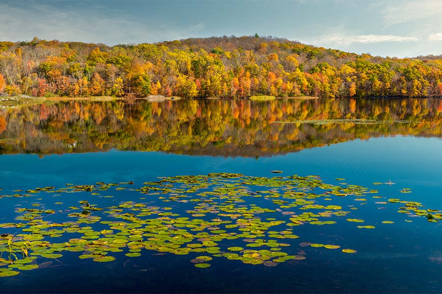 Ringwood NJ - Scenic View Water Lillies Floating on a Calm Lake Surrounded by Colorful Fall Foliage in Ringwood New Jersey