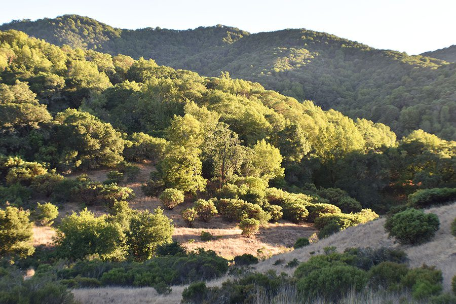 Novato, CA - View of Beautiful Rolling Hills In Marin County California During a Sunny Day Displaying Hills and Mountains