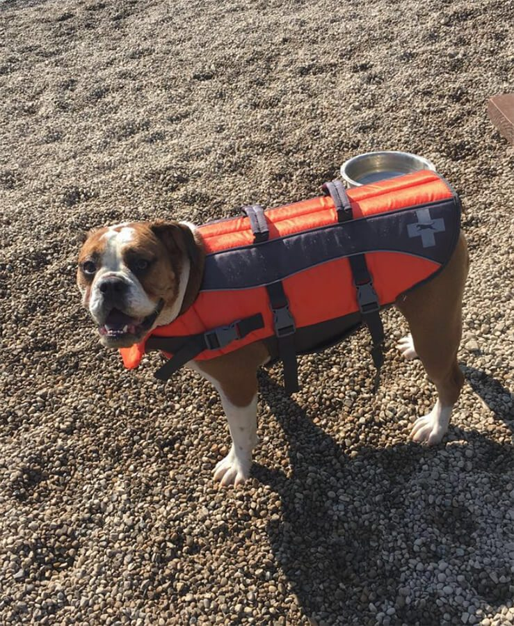 Kenny Dixon - Dog Lifevest