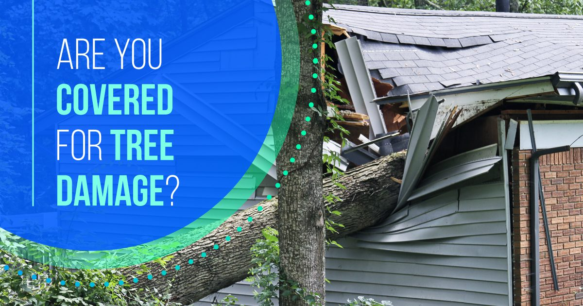 Personal Social - Are You Covered for Tree Damage