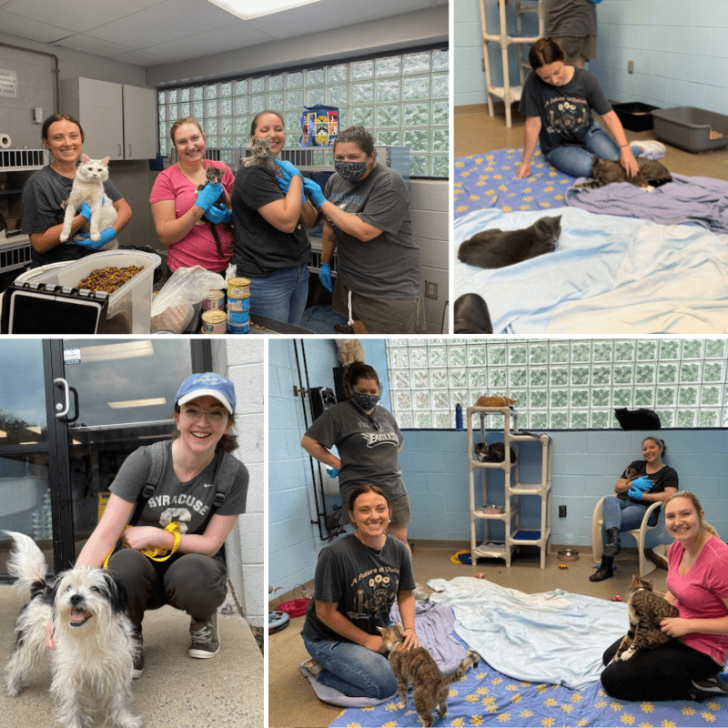 Lehigh County Humane Society - Collage of 4 Images of Team With Animals