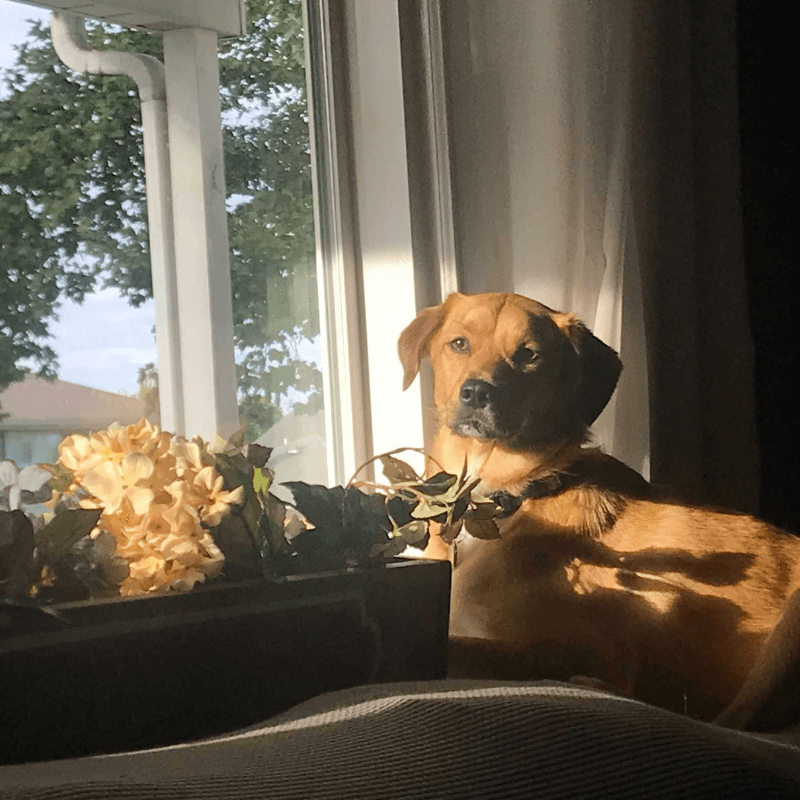 World Pet Day - Justine's Dog Sitting Near Window and Flowers