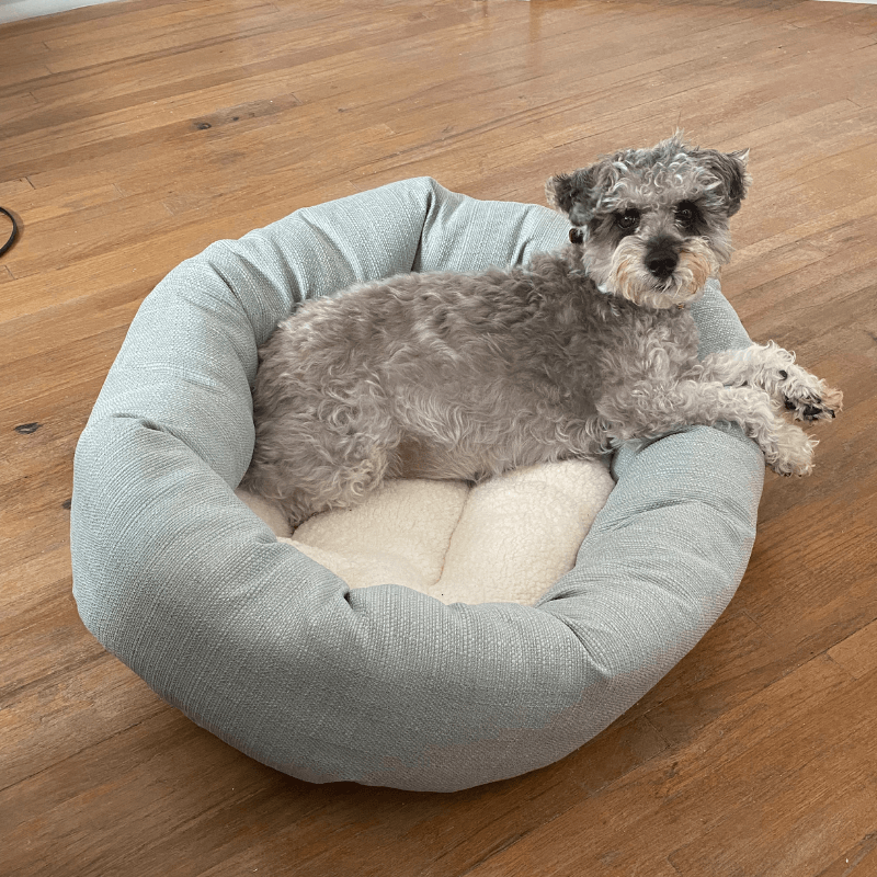 World Pet Day - Zacks Dog Laying in Dog Bed